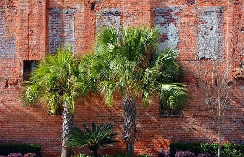 brick wall (resized to 500)